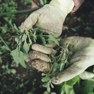 Gants pour agriculture